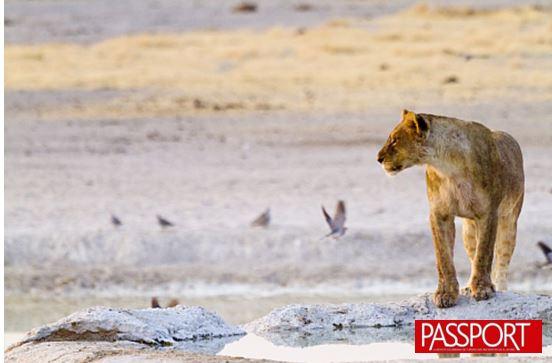 Los 5 mejores safaris de África