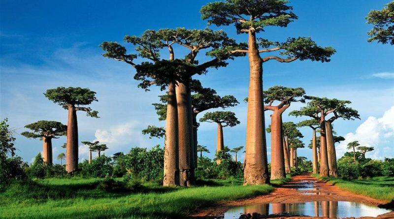 Madagascar, la gran isla del Índico